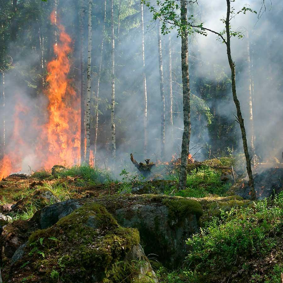 Pla de Prevenció d'Incendis Forestals