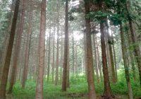 Notícies Resolució ARP/557/2018 Procuradors Forestals