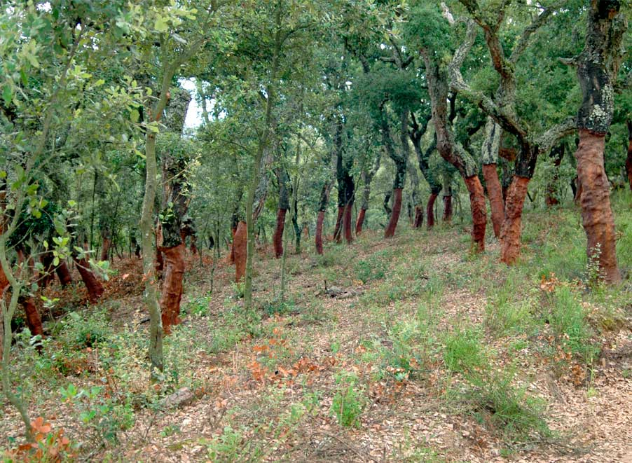 Projecte_Campanya-Suro_Procuradors Forestals